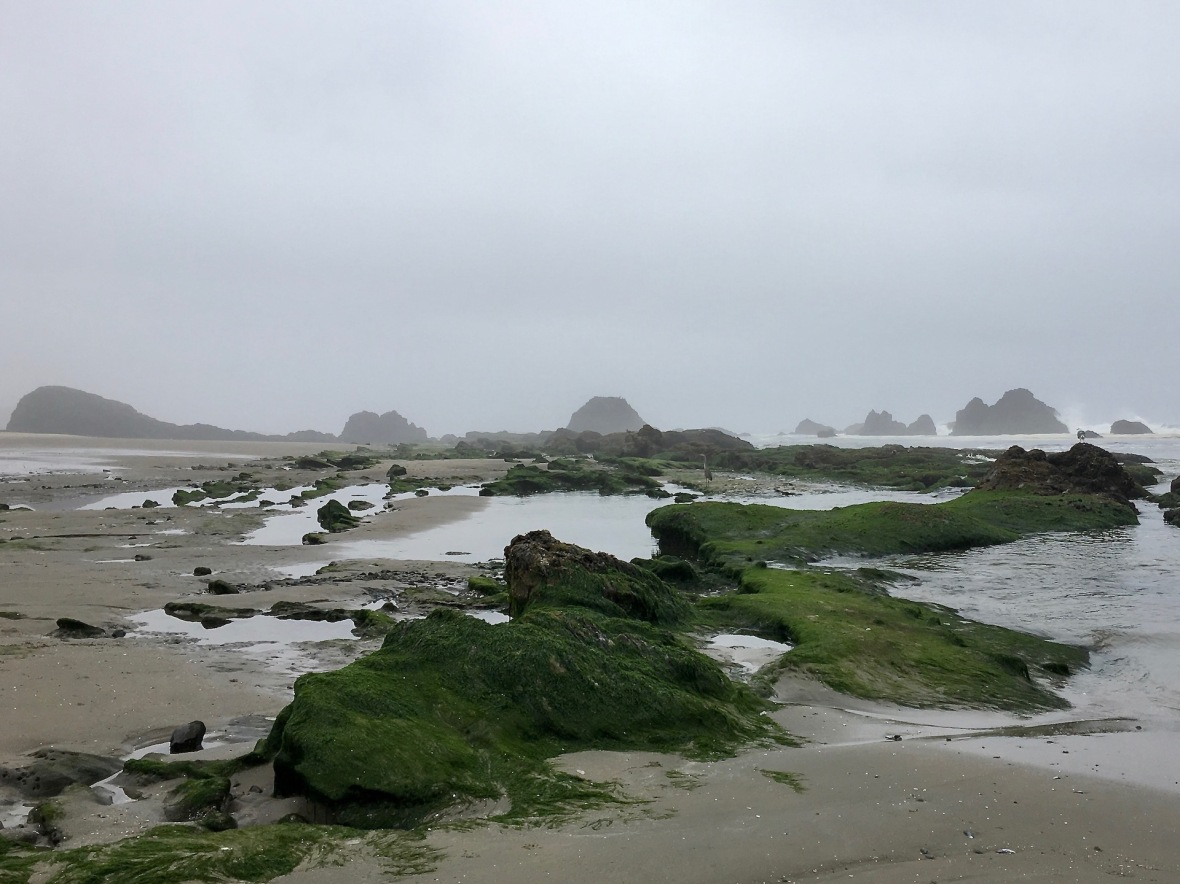 Low tide at Seal Rock State Park Oregon Highway 101