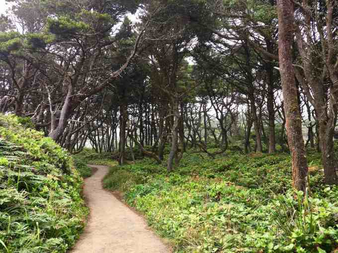 Tree-lined path to beach at Seal Rock State Park Oregon Coast Highway