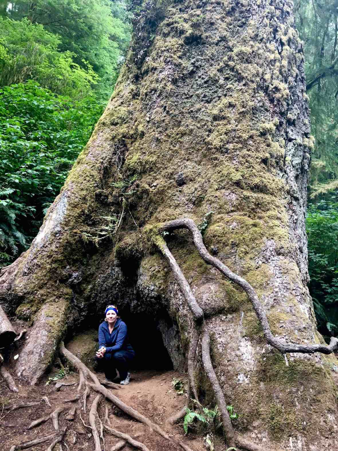 Giant Sitka Spruce at Cape Perpetua Scenic Area