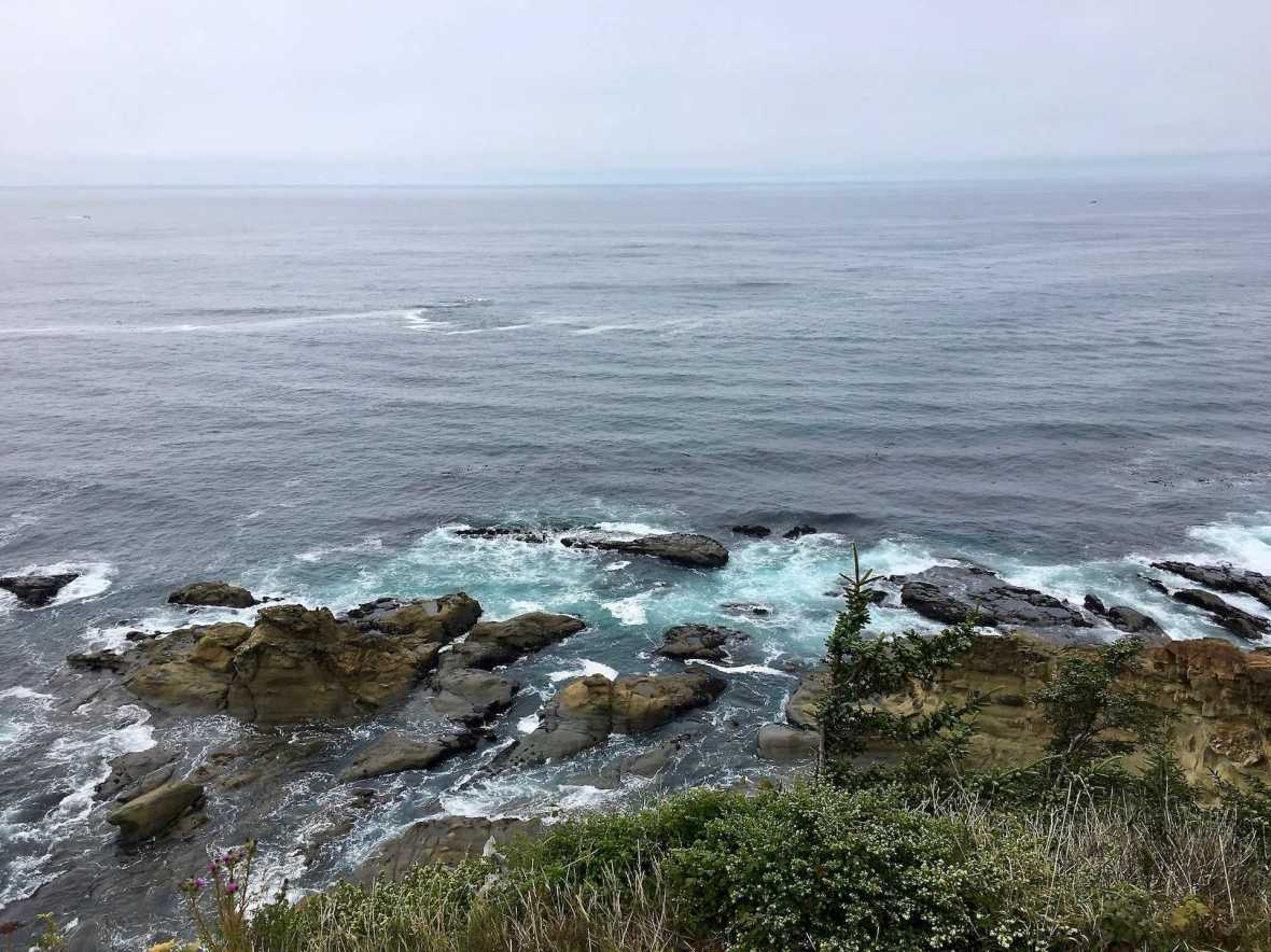 Whale watching off Simpson Reef Cape Arago State Park Oregon