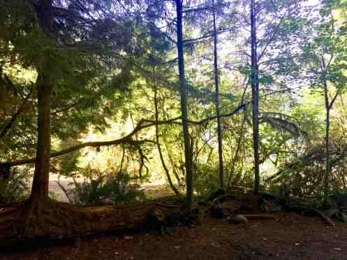 Nurse log at our campsite in Willaby Campground, Olympic National Forest Washington