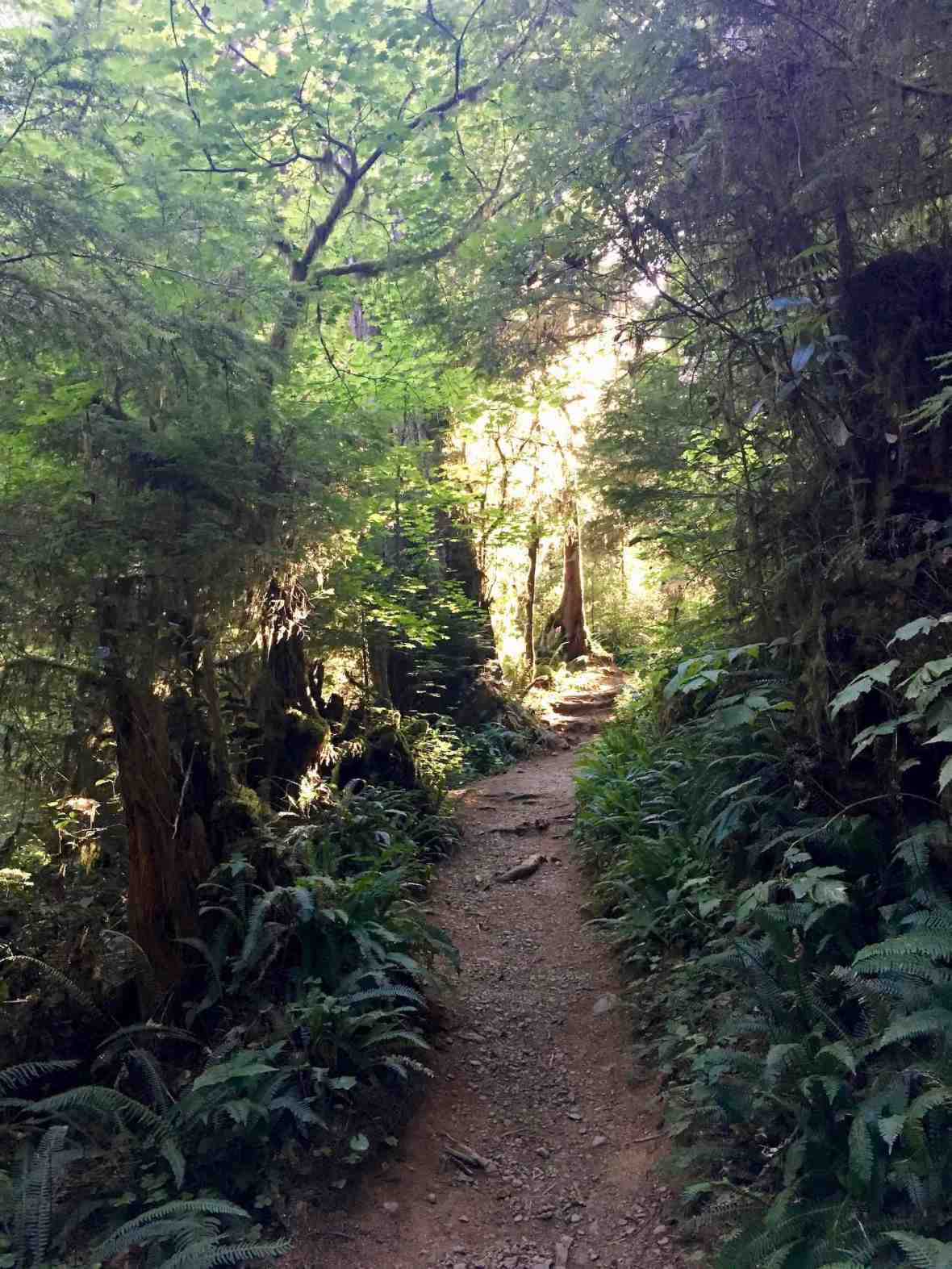 Hiking the Rainforest Nature Trail in the Quinault Valley Olympic National Forest