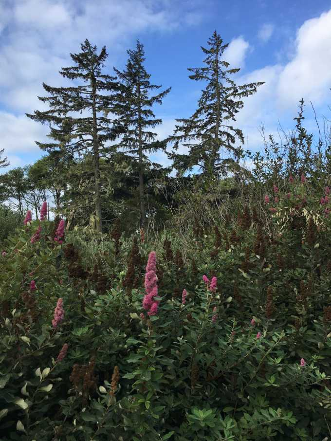 Wildflowers at Cape Disappointment State Park