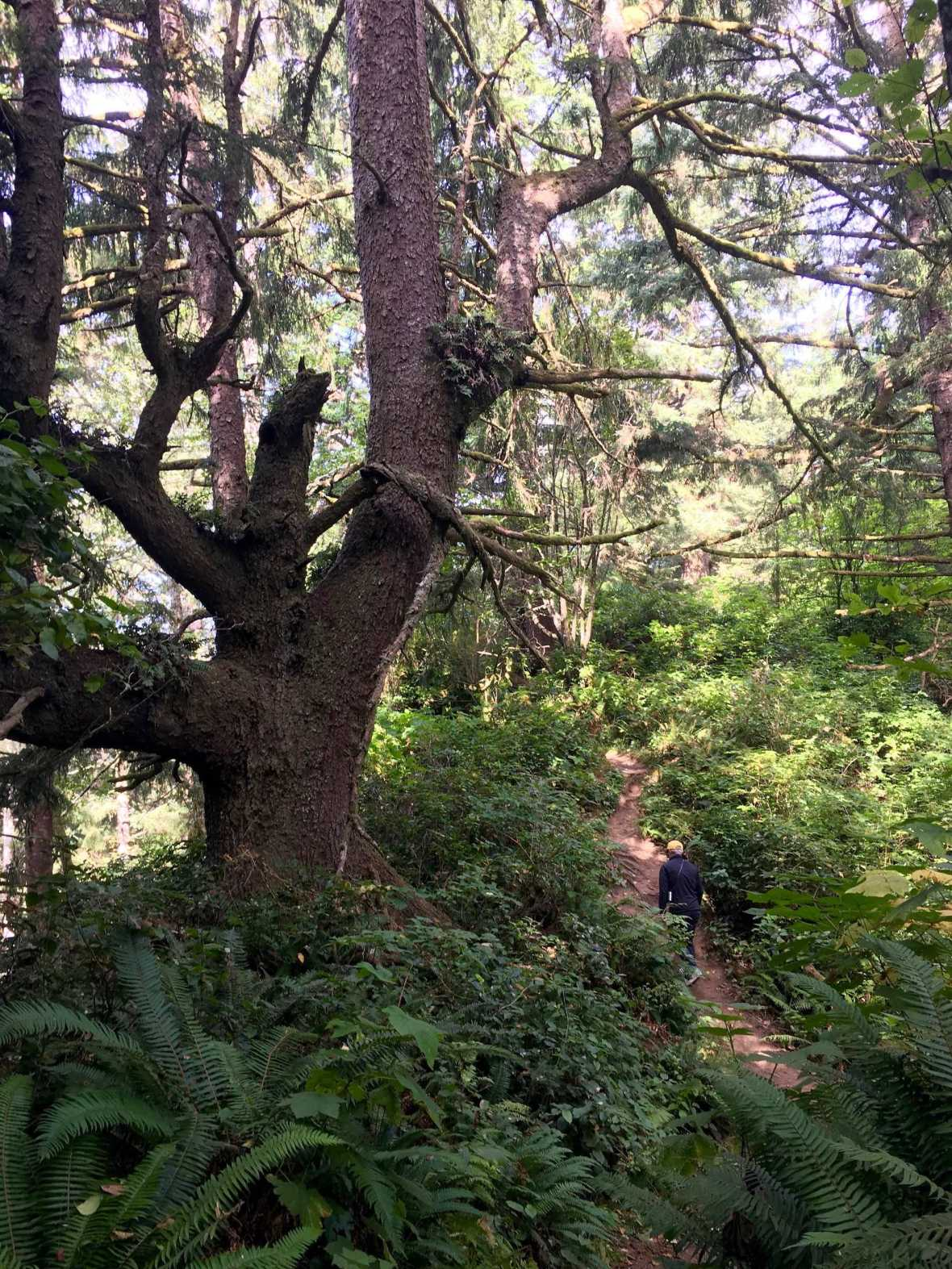 McKenzie Head Trail at Cape Disappointment State Park Washington Lewis and Clark Camp