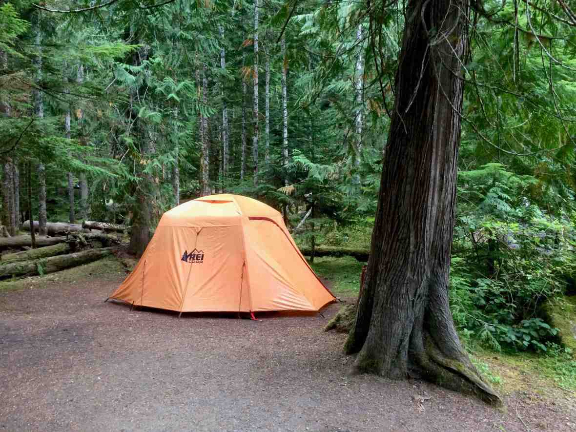 Our site at Heart o' the Hills campground Olympic National Park