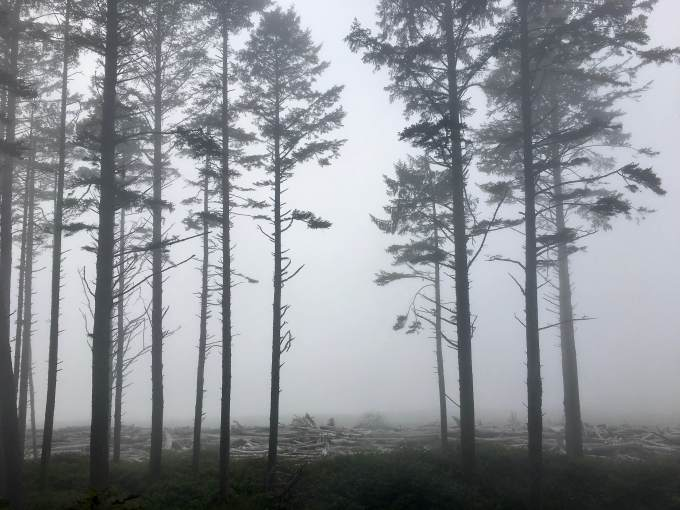 Foggy day on the bluff above Ruby Beach, Olympic National Park