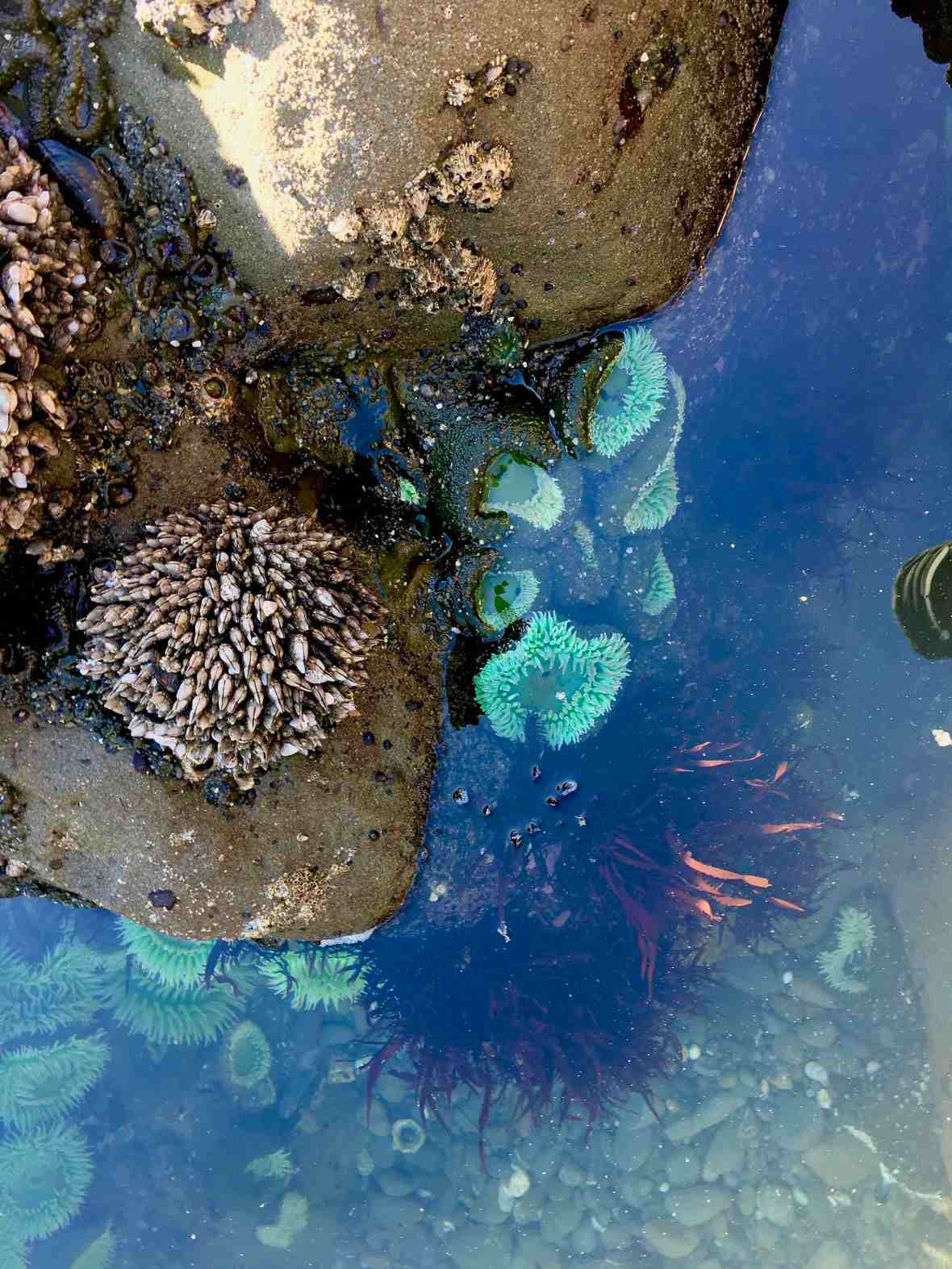 Tide pools at Beach 4, Olympic National Park