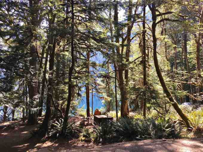 Our site at Fairholme Campground, Lake Crescent Olympic National Park