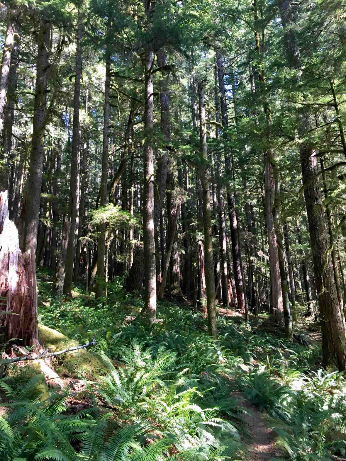 North Fork trail, Sol Duc Valley in Olympic National Park