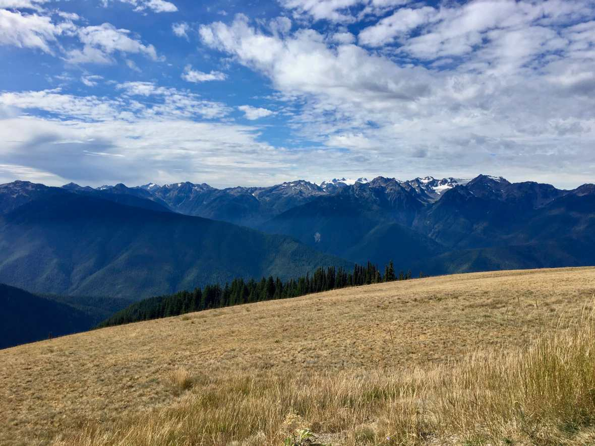 Mountain Meadows on Hurricane Ridge, Olympic National Park