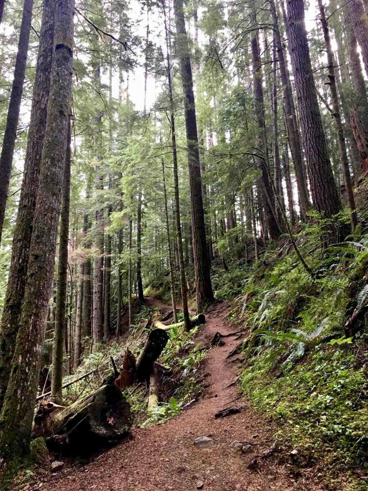 Steep trail to Lake Angeles Olympic National Park