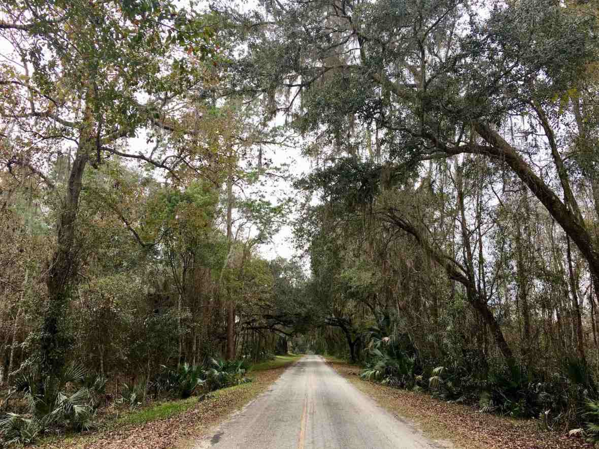 Tree tunnels on the road to Island Grove, Florida