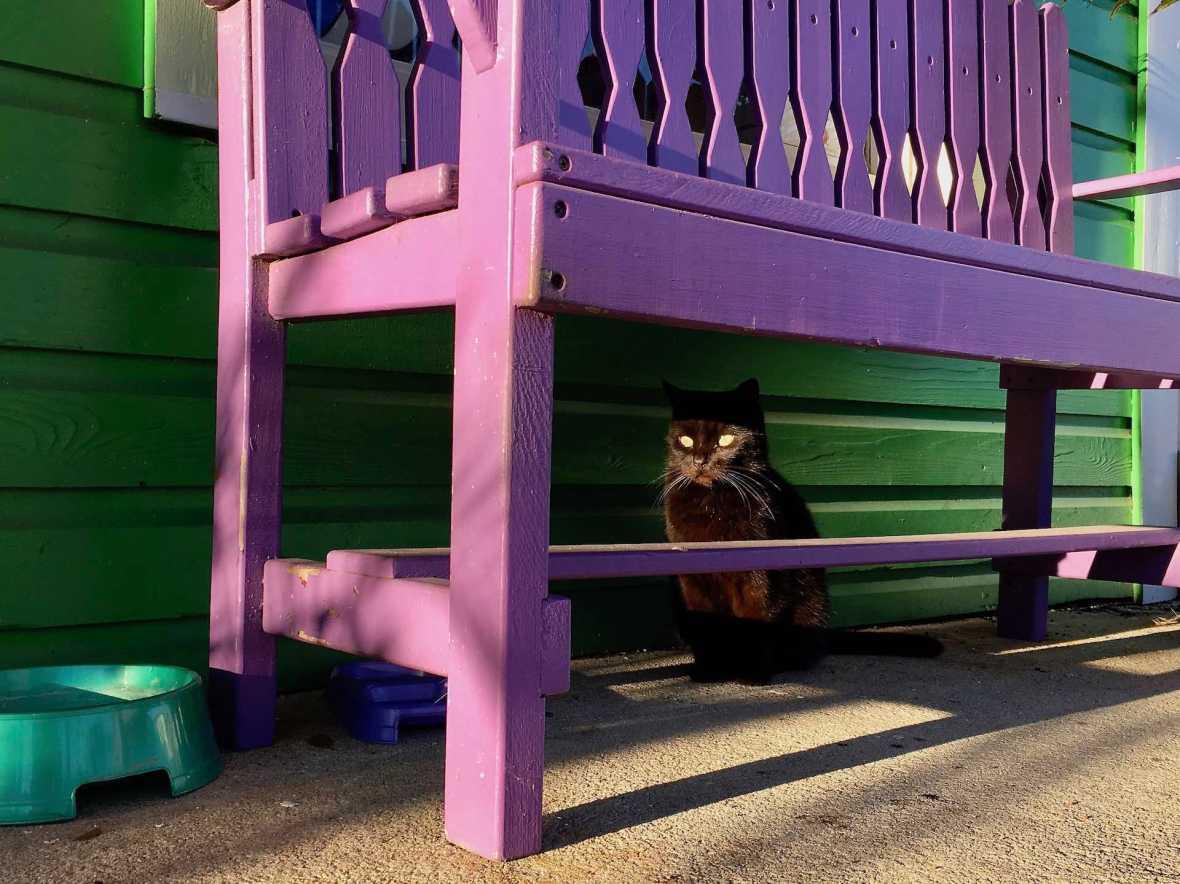 Another Cedar Key kitty
