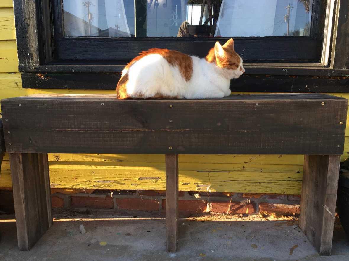 Cedar Keyferal cat