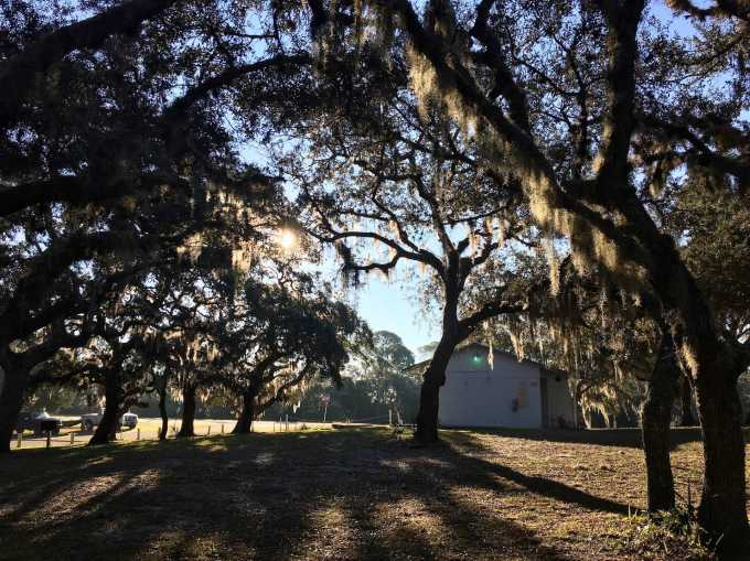Live Oak hammock, restroom facilities at Shell Mound campground levy county park Cedar Key