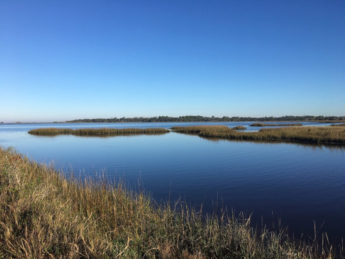 Salt Marsh, Cedar Keys