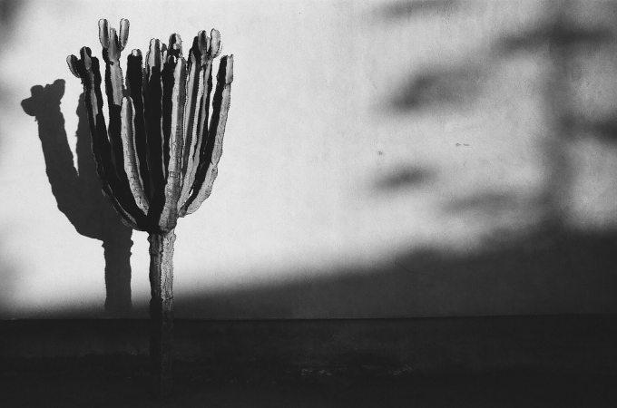 35mm film photography Kodak Tri-X black and white Cactus Old Town San Diego California Nikon F2