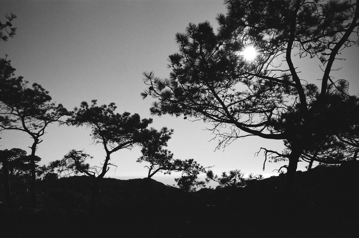 35mm film photography Kodak Tri-X black and white Torrey Pines State Natural Reserve Park San Diego California Nikon F2
