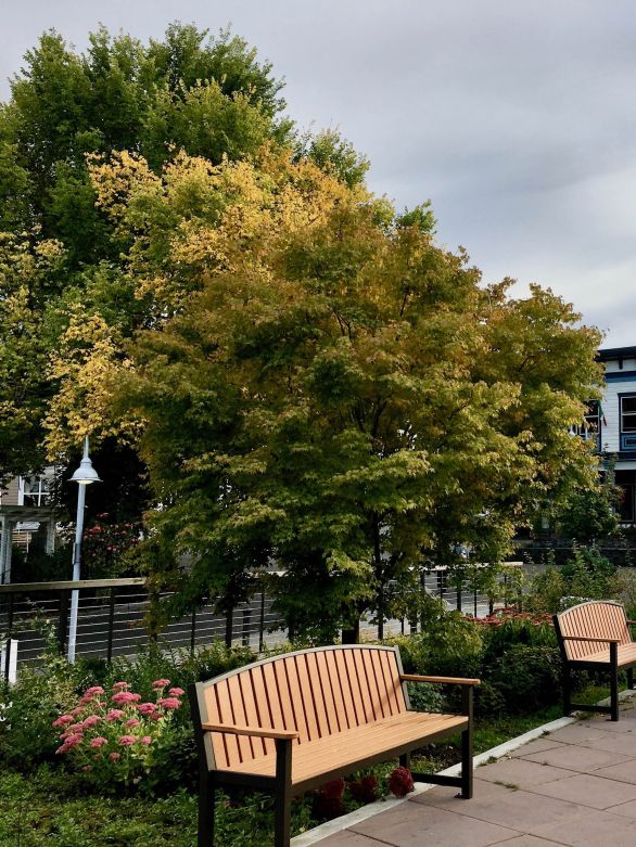 Early fall color in Friday Harbor Washington