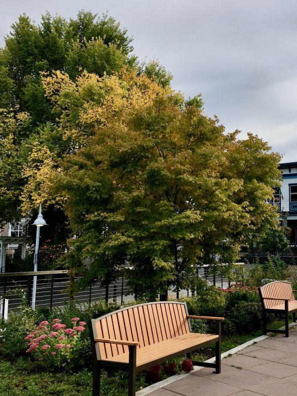 Early fall color in Friday Harbor Washington