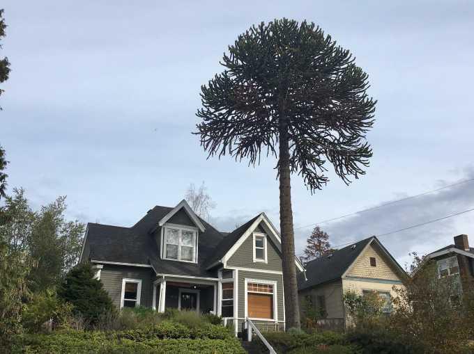 Colorful historic Bellingham, Washington homes