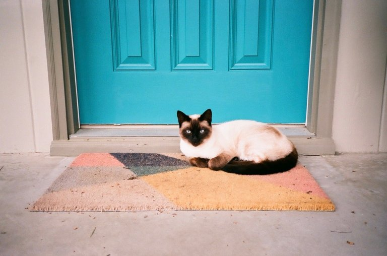 Lomo 800 film 35mm photography Siamese Cat