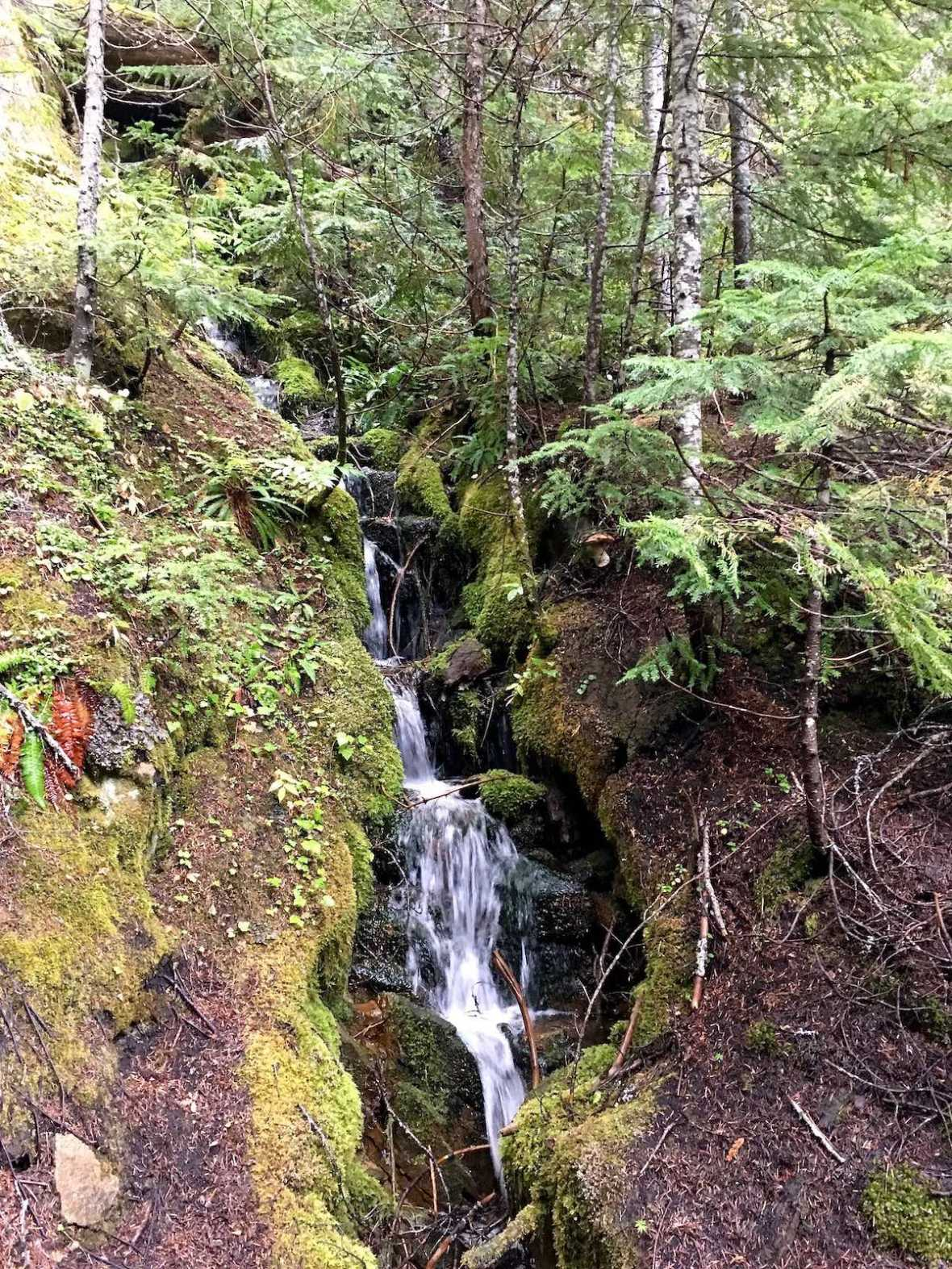 Waterfall along the Glacier Basin Trail in Mount Ranier National Park