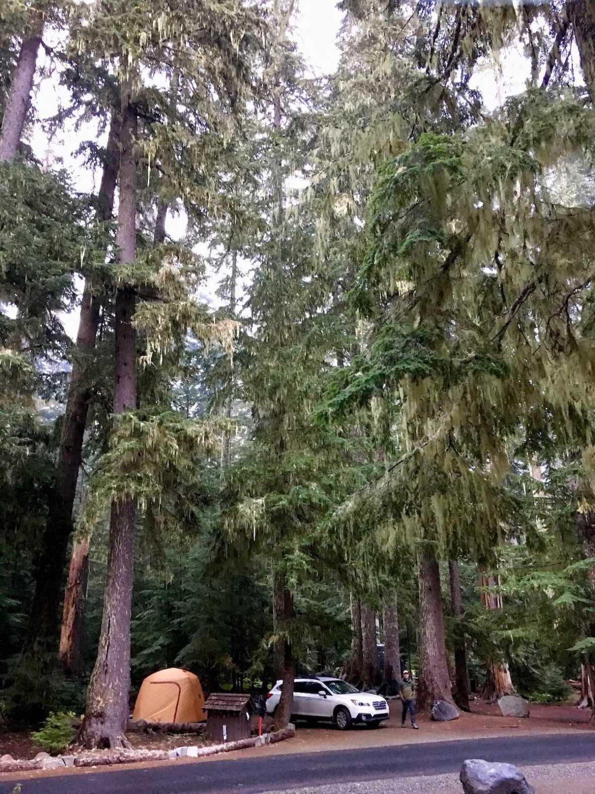 Camping under the tall trees in White River Campgound in Mount Ranier National Park