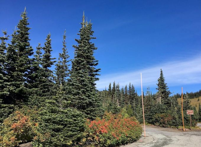 Snow poles flank Road to Sunrise picnic area in Mount Rainier National Park