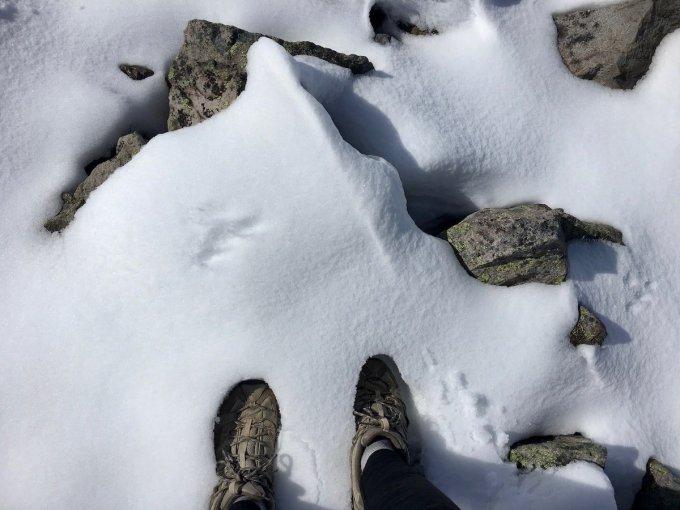 Snow on Third Burroughs in Mount Rainier National Park
