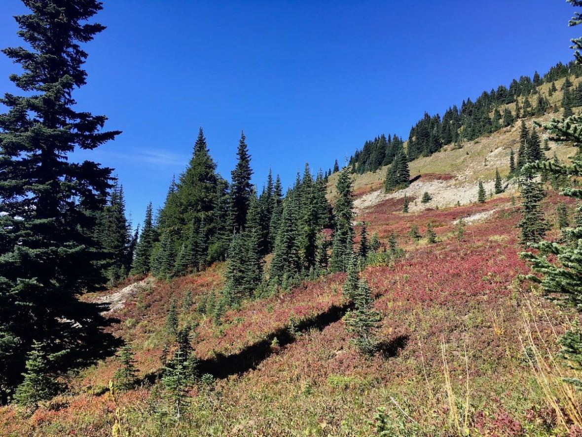We hear a bear rustling in the trees above the Naches Peak loop trail in Mount Rainier National Park