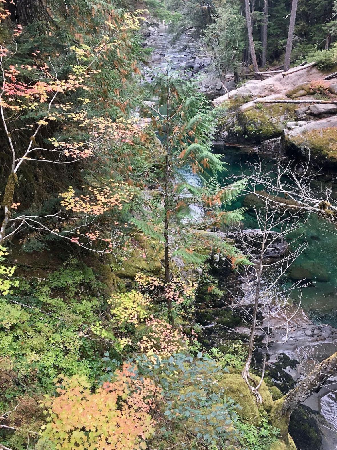 Autumn Color along the Ohanapecosh River in Mount Rainier National Park