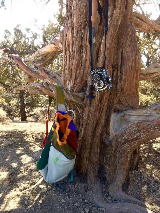 Cotopaxi daypack Minolta Autocord Juniper Tree in Smith Rock State Park
