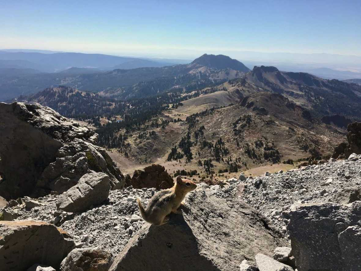 Sharing the Lassen Peak trail with Golden Mantled ground squirrels in Lassen Volcanic National Park