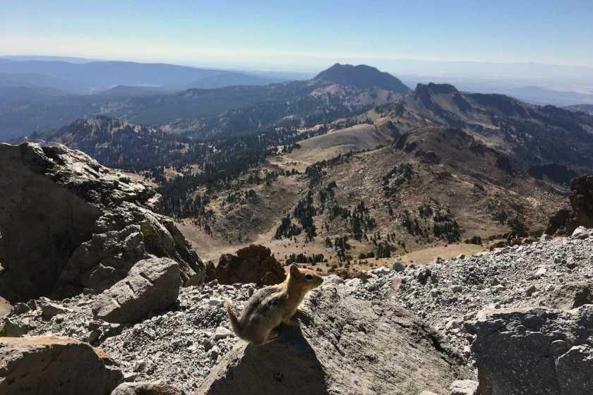 Sharing the Lassen Peak trail with Golden Mantled ground squirrels in Lassen Volcanic National Park