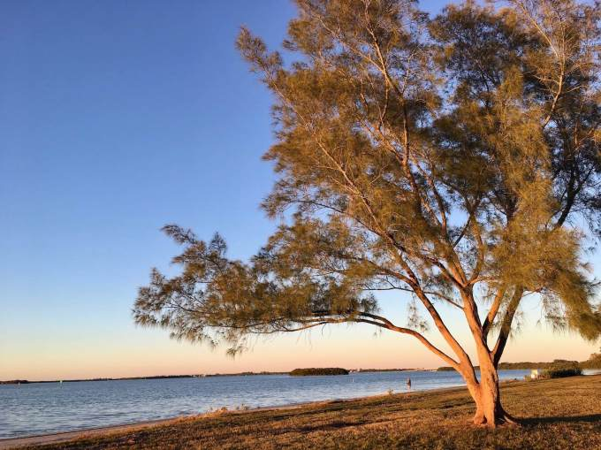 Common area along the bay behind the waterfront campsites in Fort De Soto Park