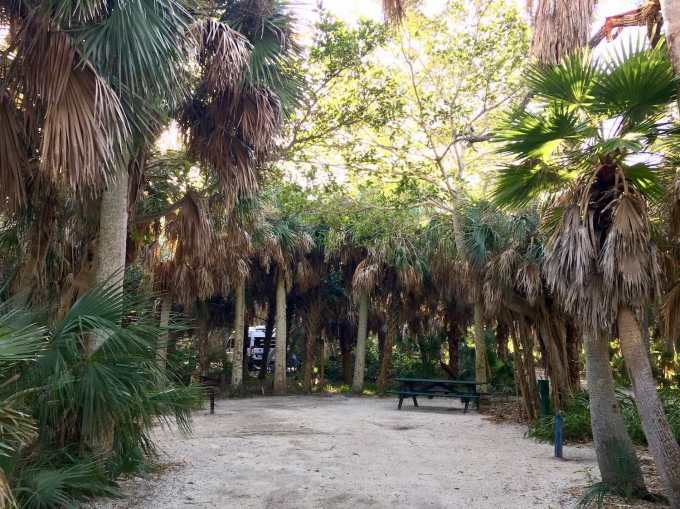 Small interior campsite surrounded by palm grove at Fort De Soto Campground