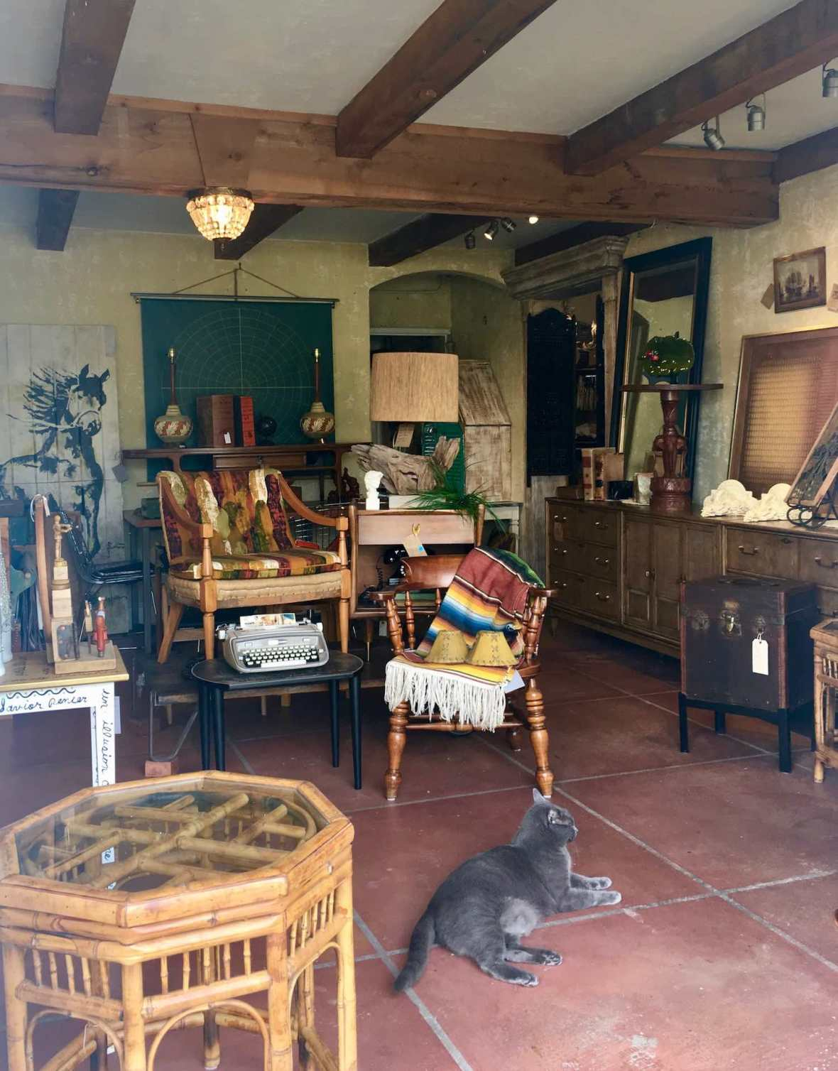 Store kitty and a beautifully curated collection at Provence Art and Antiques in Belleair Florida near St. Petersburg