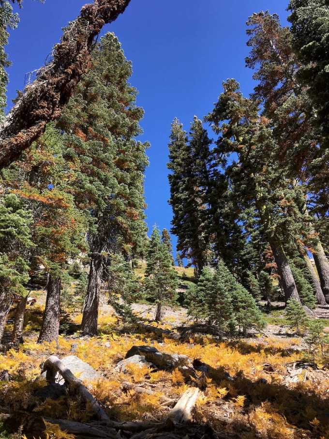 Looking up the mountain from the King Creek Trail in Lassen Volcanic National Park