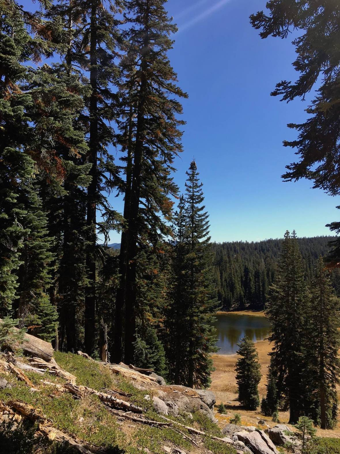 Tall evergreen trees and view of Cold Boiling Lake from Bumpass Hell trail in Lassen Volcanic National Park