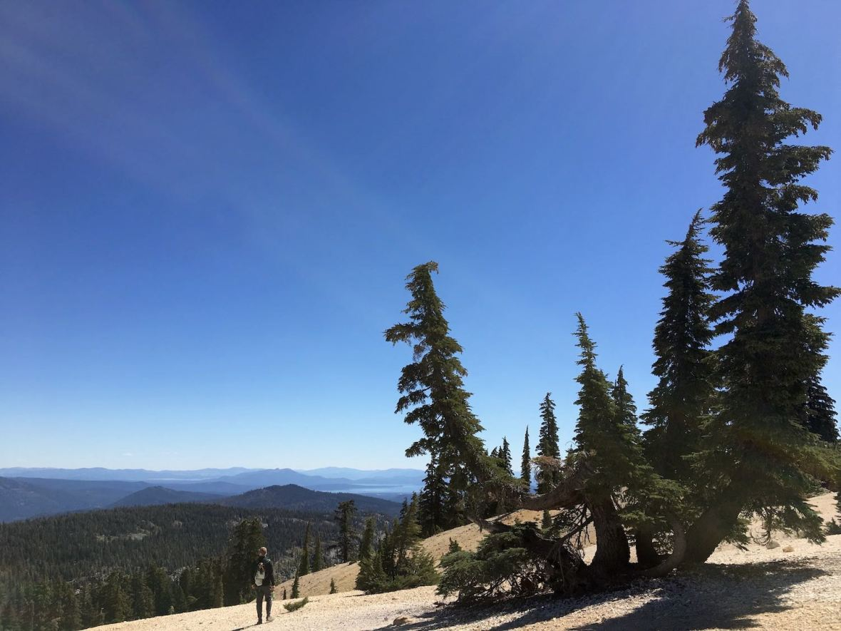 Fantastic trees, mountain vistas, and Lake Shasta view from Bumpass Hell trail in Lassen Volcanic National Park