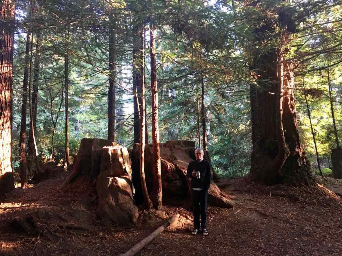 Tall redwood forest and ancient redwood stumps at Crescent City Redwoods KOA campground