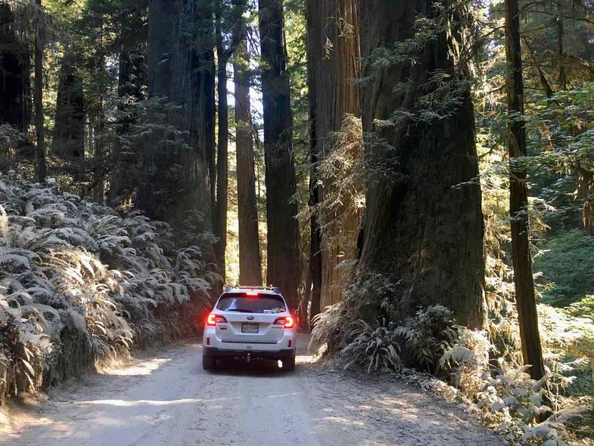Howland Hill Road through Jedediah Smith Redwoods State Park