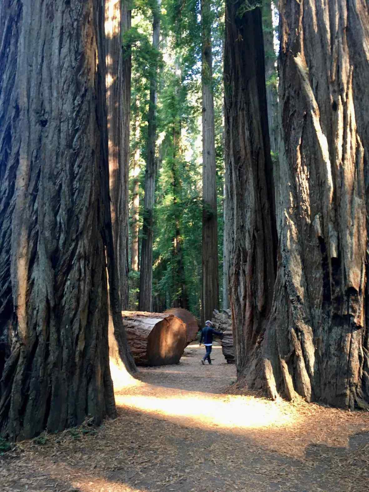 The Stout Memorial Redwood Grove at Jedediah Smith Redwoods State Park