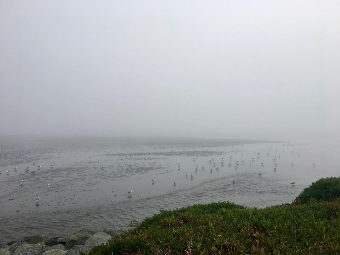 Foggy Pacific Coastline from park in Crescent City, California