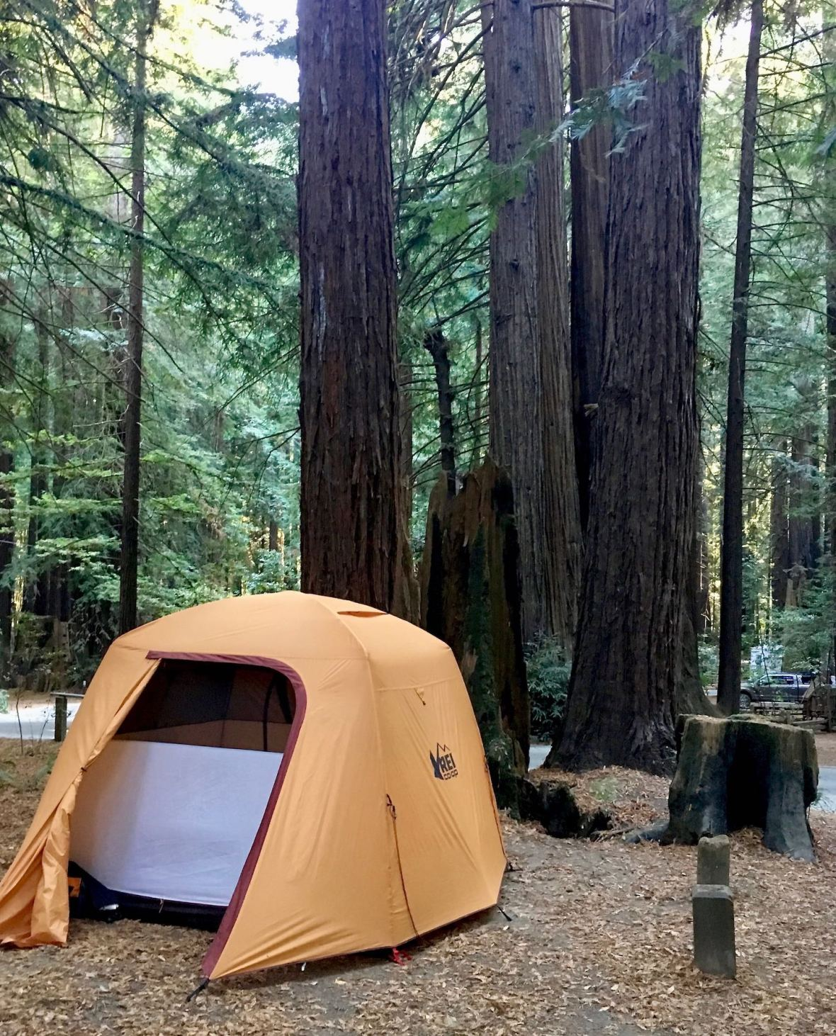 Our campsite under the towering redwoods in Burlington campground in Humboldt Redwoods State Park