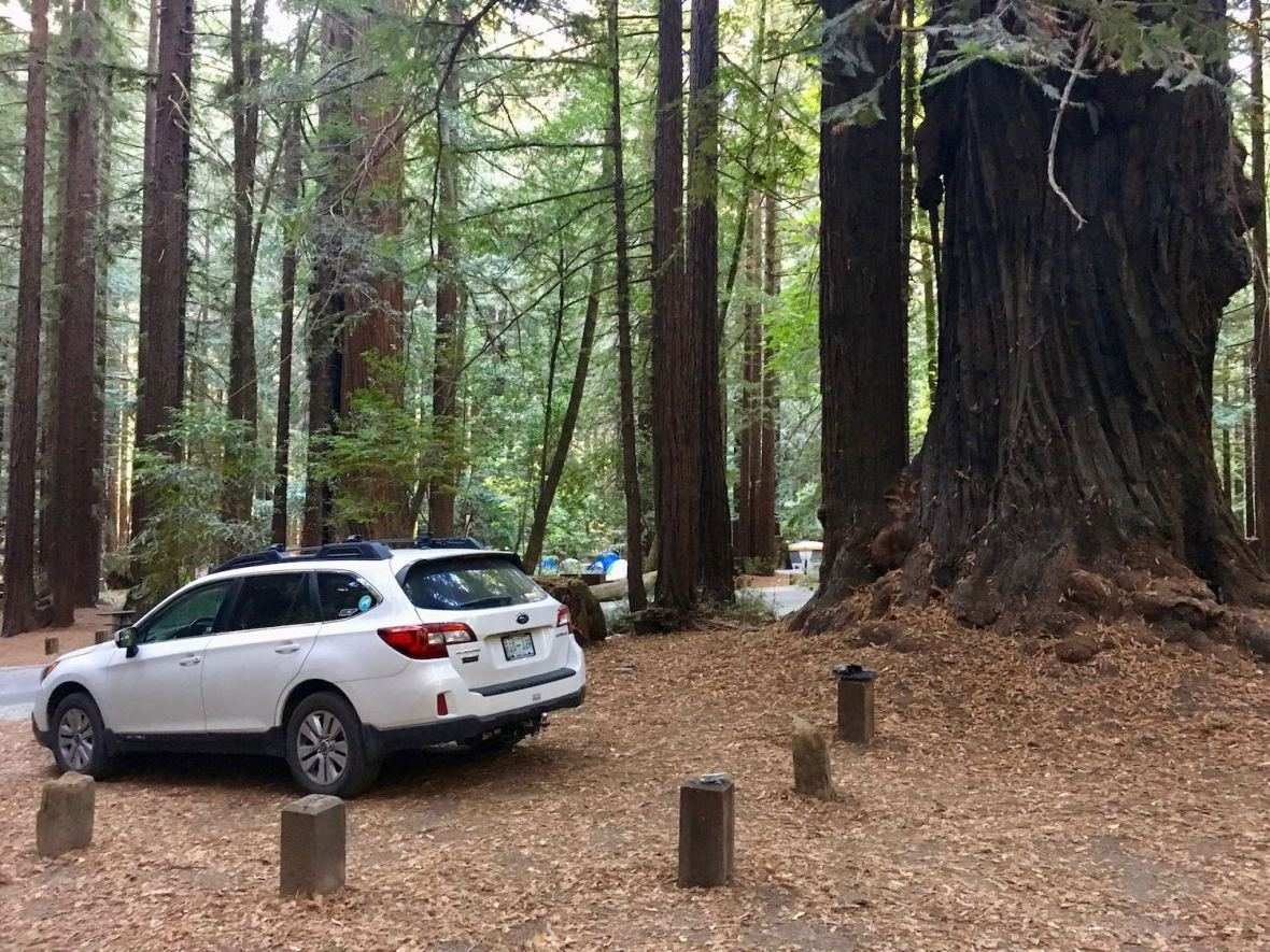 Giant trees in Burlington campground in Humboldt Redwoods State Park