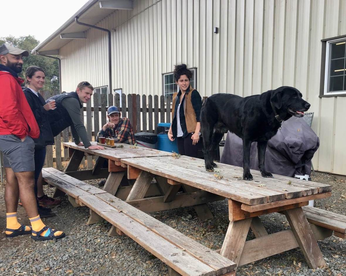 Dog-friendly and family-friendly Anderson Valley Brewing beer garden in Boonville, California