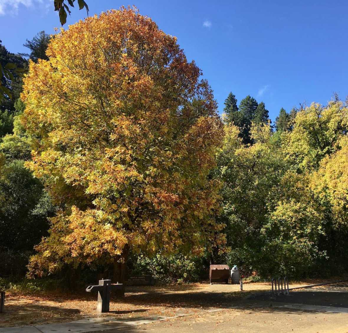 Autumn color in California's Hendy Woods State Park
