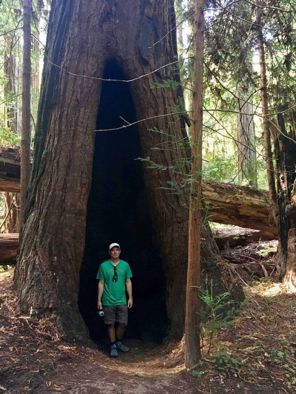 Hollow tree at Big Hendy Redwoods Grove at California's Hendy Woods State Park